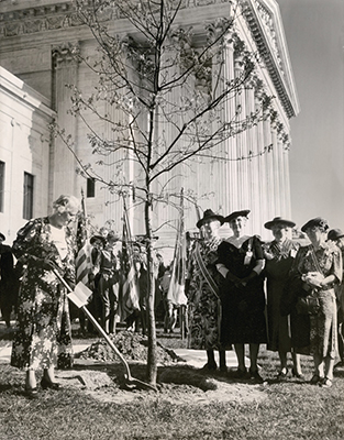 Members of the Maryland Chapter of the Daughters of the American Revolution plant a Constitution Tree in 1938. Mrs. William Chase (holding shovel) was the chair of the chapter's Conservation Committee, and requested permission from Chief Justice Charles Evans Hughes, who secured the agreement of the rest of the Justices.
